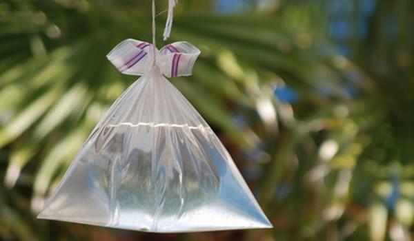 5 mẹo hiệu quả giúp đuổi ruồi ngày nắng nóng