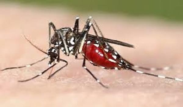 Hướng dẫn làm nến đuổi muỗi bằng hương liệu tự nhiên