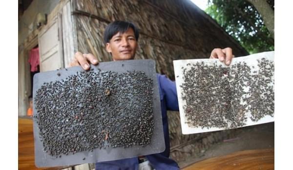 Những hệ lụy khi phải sống chung với ruồi