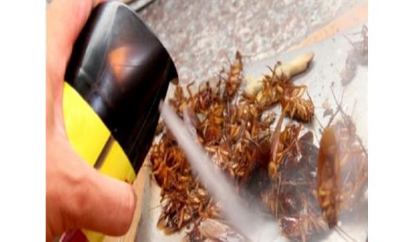 Những lưu ý khi sử dụng thuốc xịt côn trùng