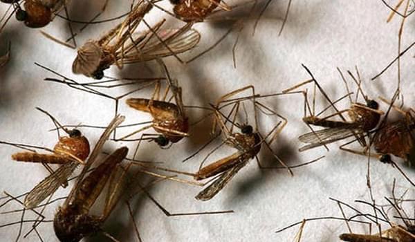 Những mẹo nhỏ khiến muỗi tránh xa nhà bạn