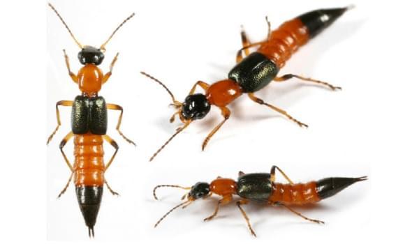Những thông tin cần biết về thế giới côn trùng trong tự nhiên