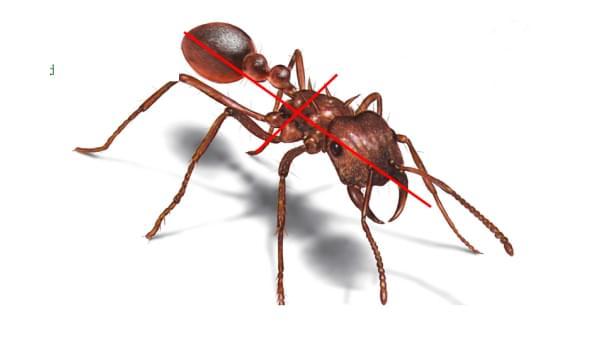 Ưu nhược điểm khi sử dụng bả diệt kiến